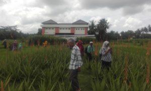 Agrowisata & Study banding