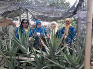 Study banding PNPM-MPd Ngawi-Rama Vera